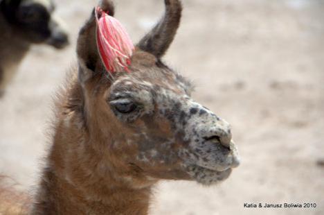 Boliwia lama